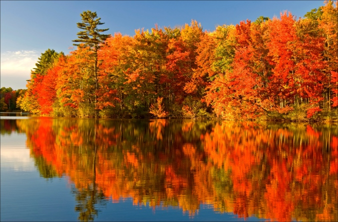 algonquin-park-autumn