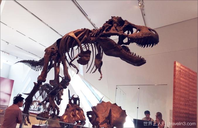 dinosaure mesume 2